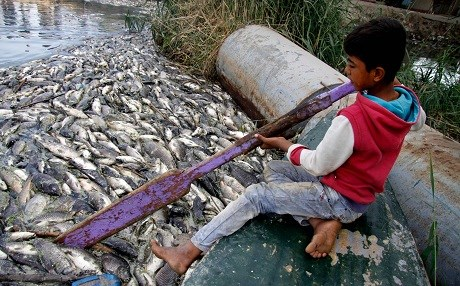 An Iraqi boy helps to clear dead fish from nearby farms floating on the Euphrates River near the town of Sadat al-Hindiya, north of the central Iraqi city of Hilla, on November 2, 2018. Photo: Haidar Hamdani/AFP