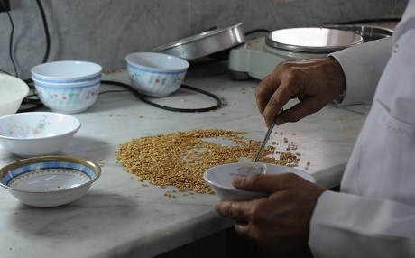 A government agricultural expert inspects wheat at the Erbil silo. Photo: Rudaw