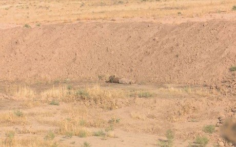 Body of an ISIS militant lies on the ground near the Peshmerga positions west of Tuz Khurmatu on August 16, 2017. Photo: Rudaw TV