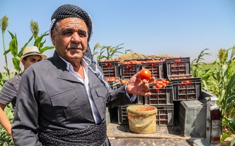 In his field in Erbil, Omar Mehedin, speaks about how climate change has affected local agriculture in the Kurdistan Region in June 25, 2018. Photos: Mohammed Shwani | Rudaw