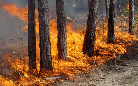 35% of the forestland burned over the past eight years was due to Iranian and Turkish bombings. Photo: Rudaw