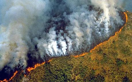 amazonlarda yangın ile ilgili görsel sonucu